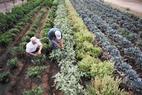 Small plantage2